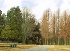 緑地 公園 村上